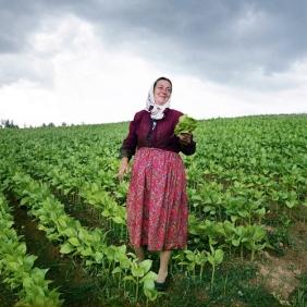 Lo coltivatrice di tabacco nella valle di Osikovo, Bulgaria ©Rocco Rorandelli/TerraProject